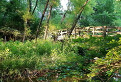 Ponte di legno nella foresta di estate che attraversa una palude e una corrente Fotografie Stock Libere da Diritti