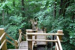 Ponte di legno nella foresta Sigulda immagine stock