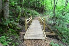 Ponte di legno nella foresta Sigulda Fotografia Stock