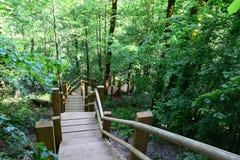 Ponte di legno nella foresta Sigulda immagini stock libere da diritti