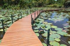 Ponte di legno nello stagno di loto Fotografie Stock