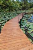 Ponte di legno nello stagno di loto Immagini Stock Libere da Diritti