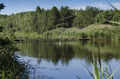 Ponte di legno sopra il fiume nella foresta, in cui un pescatore si siede in mezzo delle foreste e del cielo blu verdi immagini stock