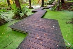 Ponte di legno sopra il piccolo stagno Fotografia Stock Libera da Diritti