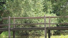 Ponte di legno sopra lo stagno video d archivio