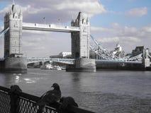 Ponte di Londra con i piccioni fotografie stock libere da diritti