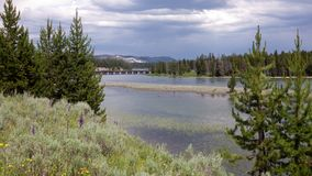 Ponte di pesca, parco nazionale di Yellowstone Fotografia Stock