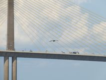 Ponte di Skyway del sole, Tampa Bay, Florida, volo del pellicano Fotografia Stock Libera da Diritti