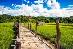 Ponte di Zutongpae sul giacimento del riso, fondo della natura di Mae Hong Son Immagini Stock Libere da Diritti