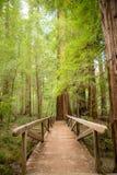 Ponte do caminho nas sequoias vermelhas Fotografia de Stock