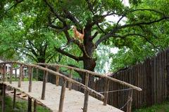 Ponte a dorso d'asino nella foresta Fotografia Stock Libera da Diritti