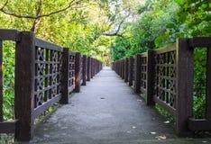 Ponte dos manguezais Fotografia de Stock