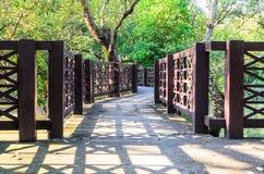 Ponte dos manguezais Imagem de Stock Royalty Free