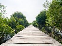 Ponte dos manguezais onde os povos andam nos manguezais Forest Conservation fotos de stock royalty free