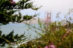 Ponte dourada de San Francisco Fotografia de Stock