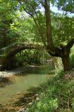 Ponte e árvore envelhecidas com Vega Imagens de Stock