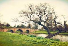 Ponte e árvore na casa de Chatworth Imagem de Stock