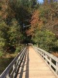 Ponte e floresta Foto de Stock