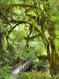 Ponte e fuga através de Moss Covered Trees de Natio olímpico Fotografia de Stock