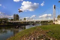Ponte e pombas de suspensão fotografia de stock