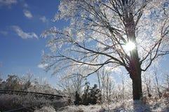 Ponte ed albero congelati Fotografia Stock Libera da Diritti