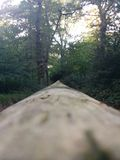 Ponte em Forrest Fotos de Stock