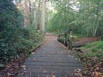 Ponte em Forrest Fotografia de Stock Royalty Free