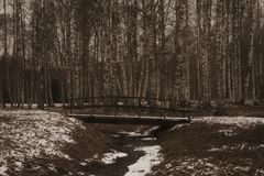 Ponte em uma floresta Fotos de Stock Royalty Free