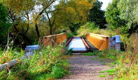 Ponte na floresta Foto de Stock Royalty Free