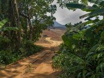 Ponte na selva Fotografia de Stock