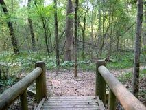 Ponte nella foresta Immagini Stock Libere da Diritti