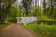 Ponte nella foresta Fotografia Stock Libera da Diritti