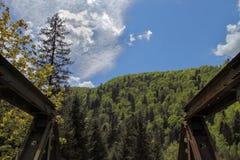 A ponte, o céu e a floresta Fotografia de Stock