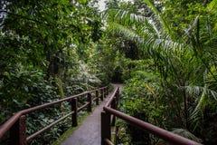 Ponte pequena na floresta Imagem de Stock Royalty Free