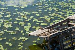 A ponte quebrada de madeira velha sobre a lagoa com reflexão dos lírios e das nuvens de água na água surge Pato selvagem que sent imagem de stock