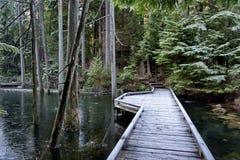 Ponte sobre o córrego da floresta Fotos de Stock