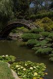 Ponte sobre uma lagoa com lírios de água Foto de Stock Royalty Free