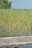 Ponte sopra il lago Switaz l'ucraina Fotografia Stock Libera da Diritti