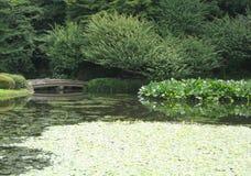 Ponte sopra Lily Covered Water Fotografia Stock