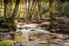 Ponte sopra una corrente boscosa in vinhos del DOS di figueiro, Leiria, Portogallo immagine stock libera da diritti