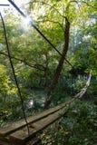 Ponte sospeso attraverso il fiume che entra nella foresta Immagine Stock