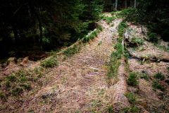 Ponte sul sentiero forestale Immagine Stock Libera da Diritti