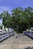 Ponte tailandesa Foto de Stock