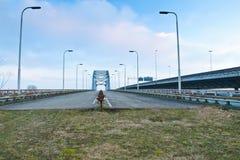 Ponte velha Imagem de Stock Royalty Free