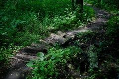Ponte velha da alvenaria sobre um córrego do pântano cercado pelo foliag luxúria Foto de Stock