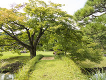Ponte verde nel giardino di Riykugien, Tokyo Fotografie Stock Libere da Diritti