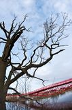 Ponte vermelha moderna e árvore estéril foto de stock