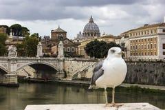 Ponte Vittorio Emanuele II, paesaggio urbano del Vaticano e un gabbiano immagine stock