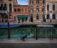 Pontes e canais de Veneza Italy Foto de Stock