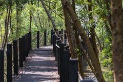 Pontes nos manguezais foto de stock